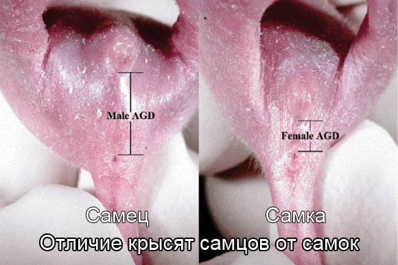 расстояние между анусом и влагалищем фото